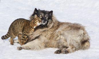 Состоится очередная прямая трансляция тандемной лекции о лейкограммах кошек и собак