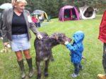 Klubová výstava vlkodavů-podpora Specific
