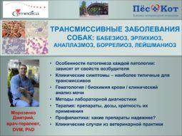 Доповідь про трансмісивні захворювання собак Дмитра Морозенка з семінарів у Дніпрі та Миколаєві