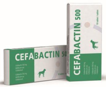 Cefabactin 500 mg