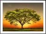 10.strom