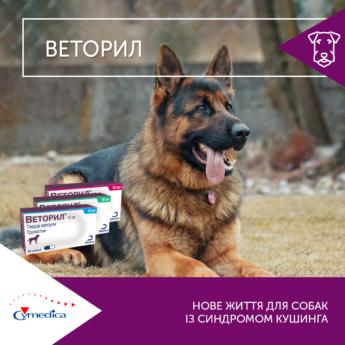 Нове життя собак із синдромом Кушинга