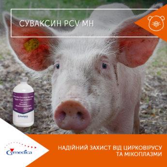 Надійний захист від цирковірусу та мікоплазми