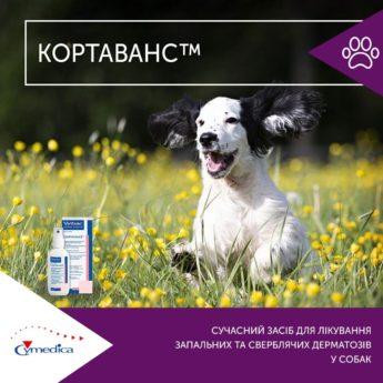Кортаванс - лікування запальних та сверблячих дерматозів у собак