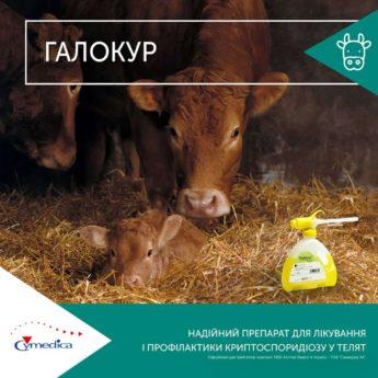 Галокур для лікування і профілактики криптоспоридіозу у телят
