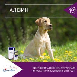 Алізин - ефективний та безпечний препарат для запобігання чи переривання вігітності собак